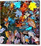 Autumn B 2015 124 Canvas Print