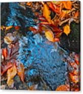 Autumn B 2015 183 Canvas Print