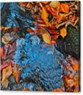 Autumn B 2015 185 Canvas Print