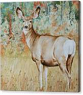 Autumn Beauty- Mule Deer Doe  Canvas Print