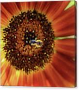 Autumn Beauty Sunflower Canvas Print