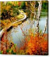 Autumn Birch Lake Boardwalk Canvas Print