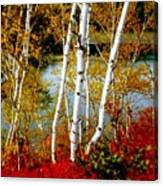 Autumn Birch Lake View Canvas Print