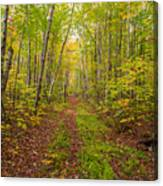 Autumn Birch Woods Canvas Print