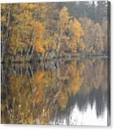 Autumn Birches On The Shore Of Lake Canvas Print