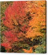 Autumn Blazes Canvas Print