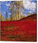 Autumn Birches And Barrens Canvas Print