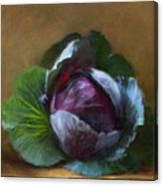 Autumn Cabbage Canvas Print