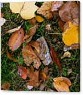 Autumn Carpet 001 Canvas Print