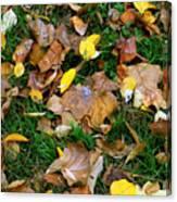 Autumn Carpet 002 Canvas Print