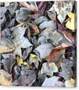 Autumn Carpet II Canvas Print