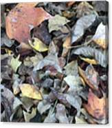 Autumn Carpet Canvas Print