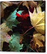 Autumn Carpet Canvas Print