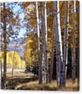 Autumn Chama New Mexico Canvas Print