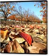 Autumn Colors 04 Canvas Print