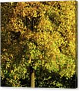 Autumn Colors 8 Canvas Print