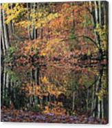 Autumn Colors Reflect Canvas Print