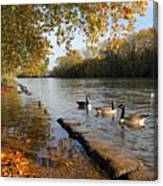 Autumn Colours At Sunbury On Thames Surrey Uk Canvas Print