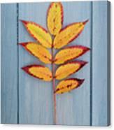 Autumn Colours On Blue Canvas Print