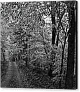 Autumn Drive Bnw Canvas Print
