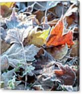 Autumn Ends, Winter Begins 3 Canvas Print