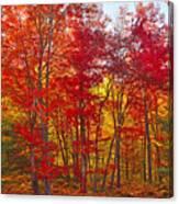 Autumn Experience Canvas Print