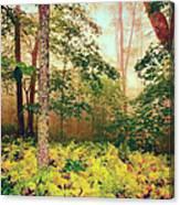 Autumn Fall Colors - Brilliant Ferns In The Blue Ridge Ap Canvas Print