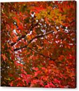 Autumn Foliage-1 Canvas Print