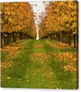 Autumn Foliage Canvas Print