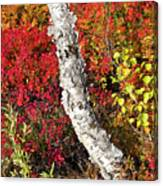 Autumn Foliage In Finland Canvas Print