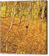 Autumn Foliage Lc Canvas Print