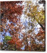 Autumn Forest Canopy Canvas Print