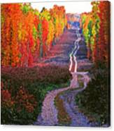 Autumn Forest Track Canvas Print