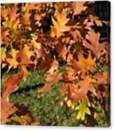 Autumn Fragrance Canvas Print