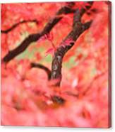 Autumn From Within Canvas Print