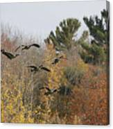 Autumn Geese Canvas Print
