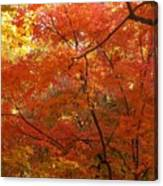 Autumn Gold Poster Canvas Print