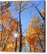 Autumn Gold Sunburst Canvas Print