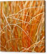 Autumn Grass Abstract Canvas Print
