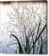 Autumn Grasses Canvas Print