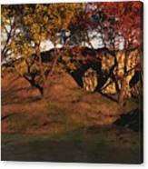 Autumn Grove Canvas Print