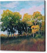 Autumn Grove Canvas Print