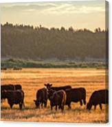 Autumn Herd Canvas Print