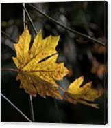 Autumn Highlight Canvas Print