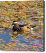 Autumn In Creek Mix Canvas Print
