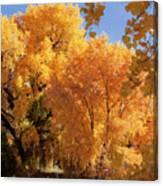Autumn In Curtin Canvas Print