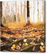 Autumn In Finland Canvas Print