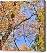 Autumn In Full Swing Canvas Print