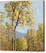 Autumn In New Hampshire Canvas Print