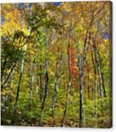 Autumn In Schooley's Mountain Park 2 Canvas Print